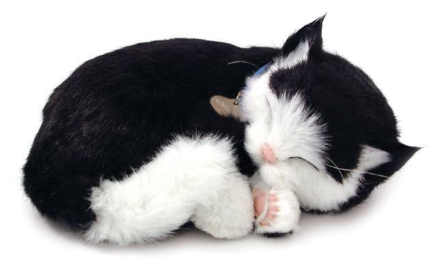 Breathing Cat