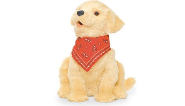 Companion Pup