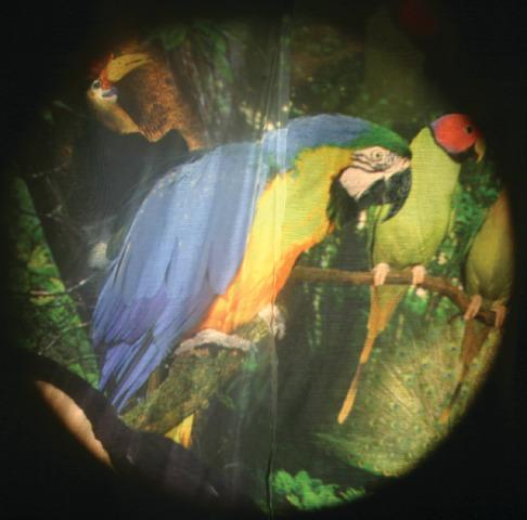 Solar Projector Effects Wheels- Style: Tropical Birds