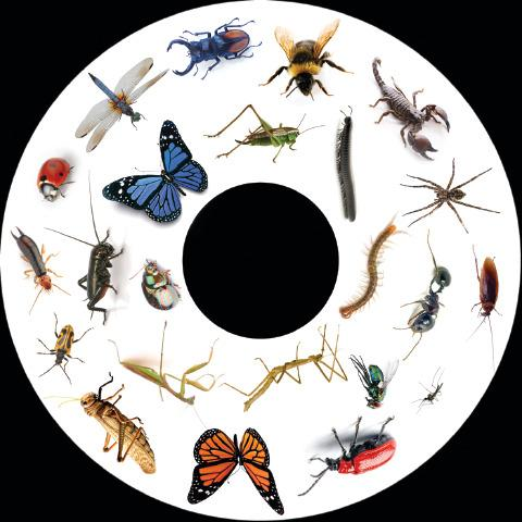 SNAP Projector Wheels- Style: Insects
