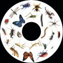 SNAP Projector Wheels- Style: Insects Snap Wheel