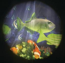 Solar Effects Wheels- Style: Tropical Fish